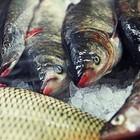 Недели местной рыбы: Специальные блюда в 12 московских ресторанах