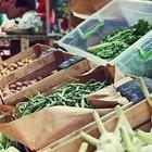 На этих выходных в «Музеоне» пройдёт Фестиваль молодых овощей