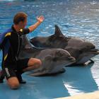 В парке «Фили» можно будет поплавать с дельфинами