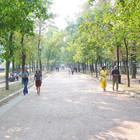 Московские деревья поставят на учёт за семь миллионов