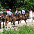 В Петербурге появится конная полиция