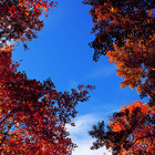 Новости осени: Бабье лето, листопад и миграция птиц