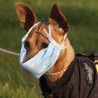 Милиционеры раздадут более 200 тысяч защитных масок