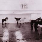 На «Красном Октябре» Яннис Кунеллис показывает свою инсталляцию