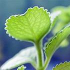Сделай сад: Что киевляне выращивают у себя на балконах