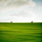 Аотеароа-длинное белое облако. Летим в Новую Зеландию!