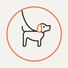 Создан краудфандинговый сервис для помощи бездомным животным