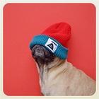 Лучшие страницы Instagram с животными: Часть 1