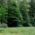 Блогеры о ситуации вокруг вырубки Химкинского леса