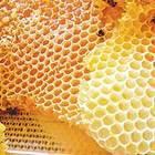 В «Измайлово» и «Кузьминках» состоится праздник меда