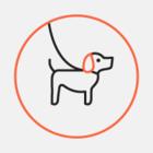 Найденная в Московском районе енотовидная собака