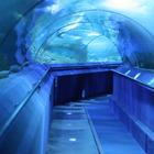 Необыкновенные аквариумы
