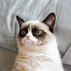 События недели: GusGus, Matisyahu и эволюция котиков
