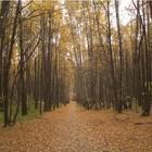 В Битцевском парке повторяется история Химкинского леса