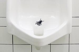 Взять на муху: Александра Шевелева о чистоте в общественном туалете и силе простых решений