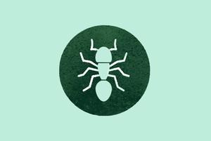 Как избавиться от домашних насекомых