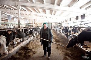 Репортаж: Как делают молочные продукты в «Лосево»