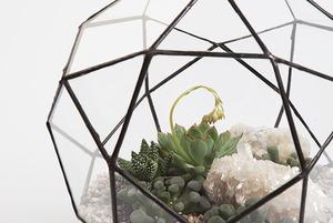 Террариумы с комнатными растениями Blossom Universe