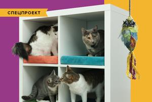 Кошкин дом: Как подготовить квартиру к появлению домашнего питомца
