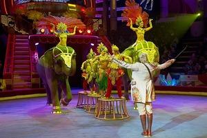 Фон для слона: Я работала в цирковом балете