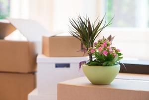 Организаторы пространства и клинер — о том, как убирать правильно