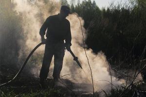«2010 год может повториться» — Greenpeace о пожарах в Подмосковье