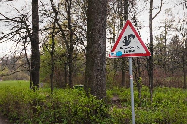 Директор ЦПКиО: «Елагин не станет парком Горького». Изображение № 13.