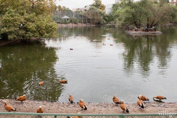 Директор московского зоопарка: «Погода была ужасной, всё выглядело очень грустно». Изображение № 17.
