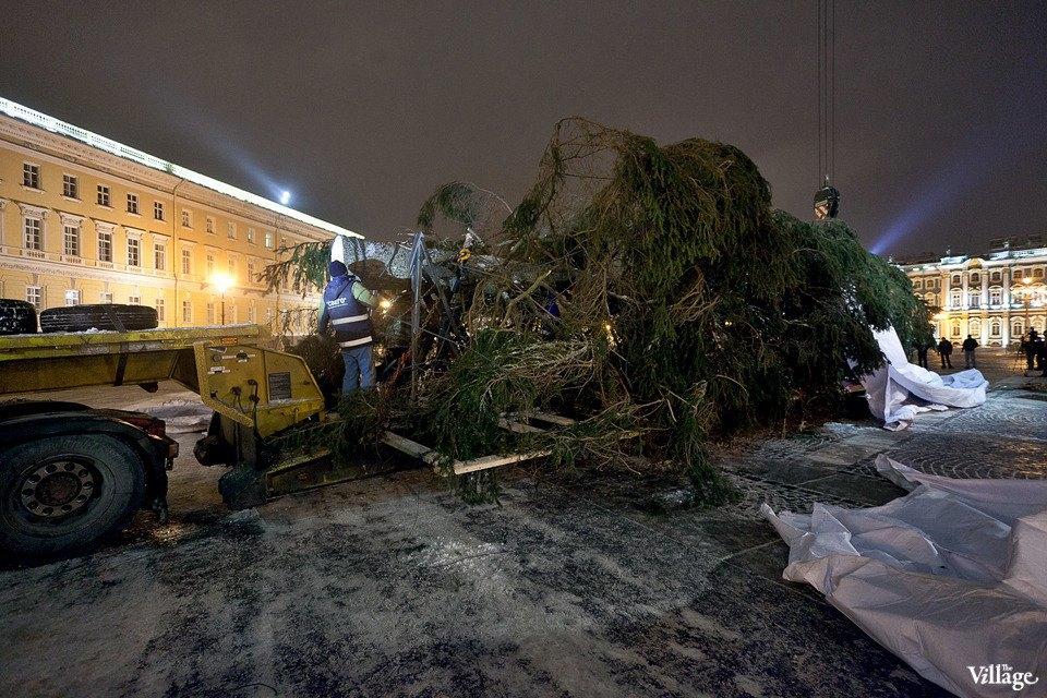 Фоторепортаж: Как устанавливали главную петербургскую ёлку. Изображение № 16.