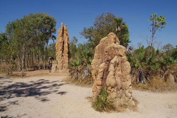 Дизайн от природы: Дом-термитник, жилая дюна и оранжереи в пустыне. Изображение № 7.