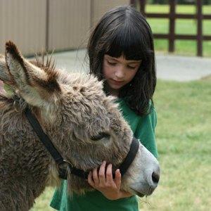 Майские сдетьми: Шесть агроферм, где живут мини-пони, страусы, верблюды иламы. Изображение № 6.