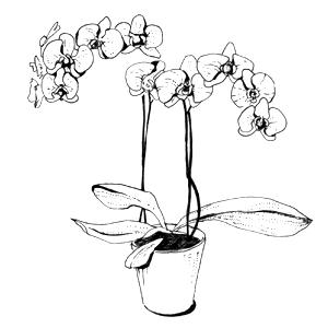 Гид The Village: Комнатные растения. Изображение № 38.