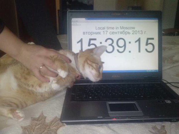 У москвички требуют выкуп за кота. Изображение № 1.