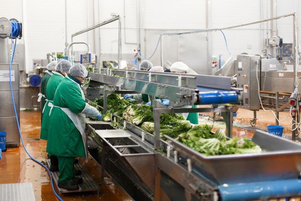 Производственный процесс: Как делают салаты для McDonald's. Изображение № 13.