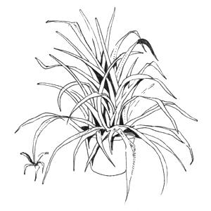 Гид The Village: Комнатные растения. Изображение № 40.