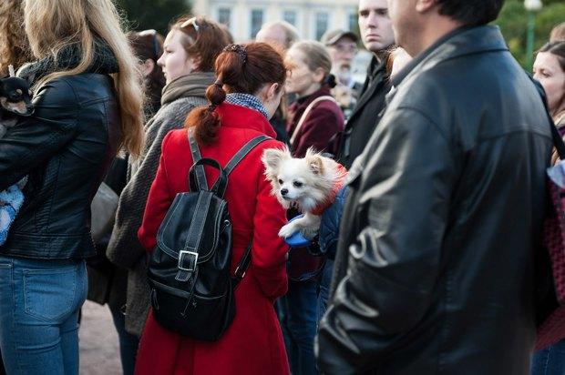 «Пустой поводок»: Как владельцы собак борются сэпидемией отравлений . Изображение № 4.