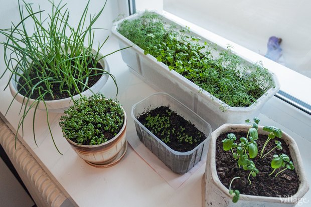 Сделай сад: Что киевляне выращивают у себя на балконах. Зображення № 41.