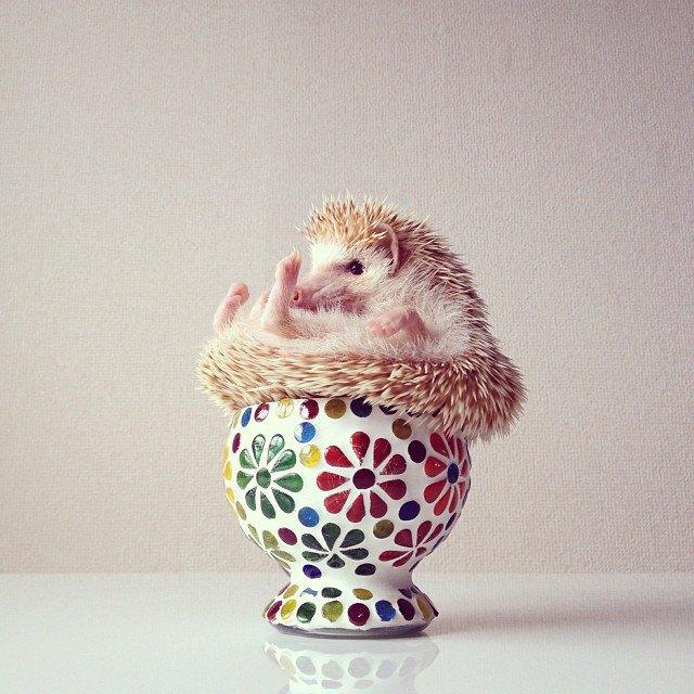 Лучшие страницы Instagram с животными: Часть 1. Изображение № 4.