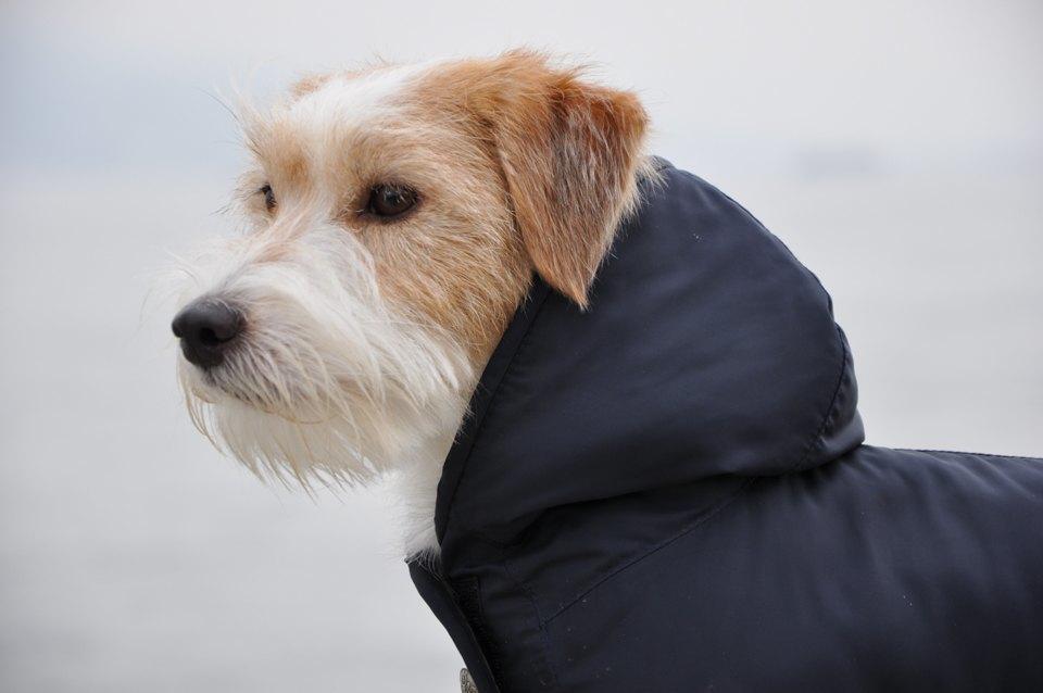 Как архитектор стала шить одежду для собак. Изображение № 5.
