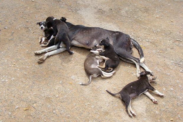 Иностранный опыт: Что делать сбездомными собаками. Изображение №1.