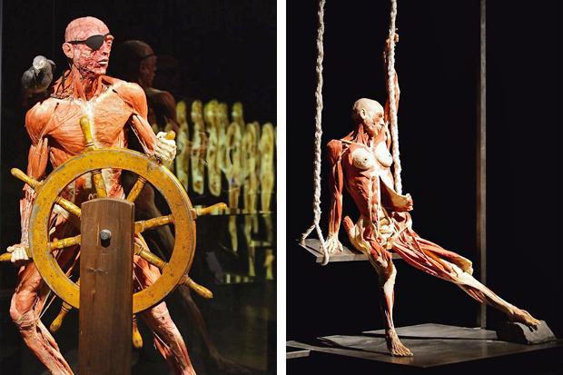 Спустили шкуру: В Киев привезут The Human Body Exhibition. Зображення № 12.