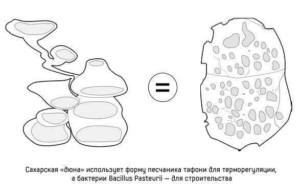 Дизайн от природы: Дом-термитник, жилая дюна и оранжереи в пустыне. Изображение №9.