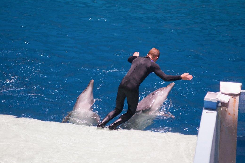 «Главные здесь — косатки, но самые милые — моржи»: На ВДНХ открылся океанариум. Изображение № 18.