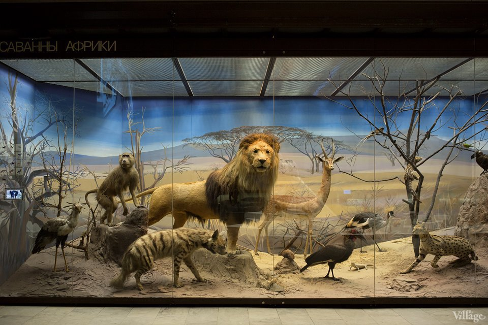Перемены в Дарвиновском музее: «Можно бегать, прыгать и шуметь». Изображение № 5.