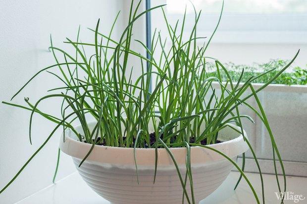 Сделай сад: Что киевляне выращивают у себя на балконах. Зображення № 44.