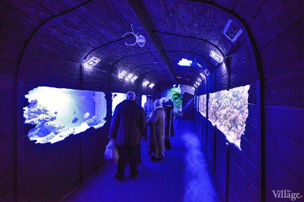 В «Детском мире» начал работать океанариум. Зображення № 1.