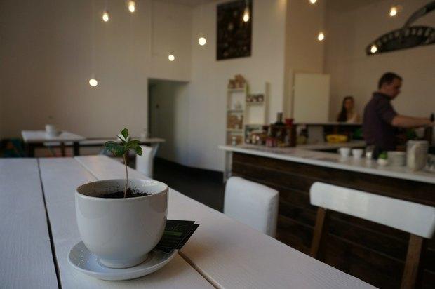 Владельцы Robusta открыли кофейню City Coffee. Изображение № 2.