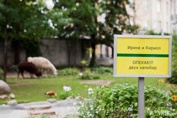 Директор московского зоопарка: «Погода была ужасной, всё выглядело очень грустно». Изображение № 5.