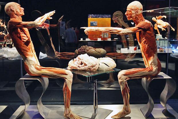 Спустили шкуру: В Киев привезут The Human Body Exhibition. Зображення № 11.