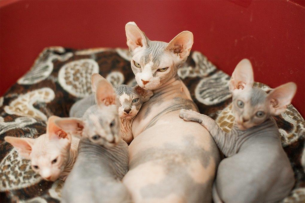 «Мурмулет»: Как заработать на котятах за полмиллиона рублей. Изображение № 3.